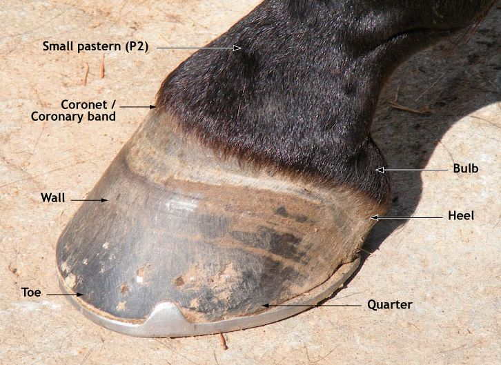 hoof labelled